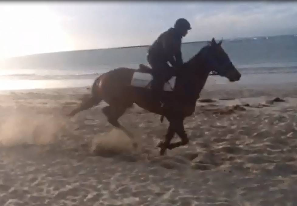 A horse training at Killarney beach.