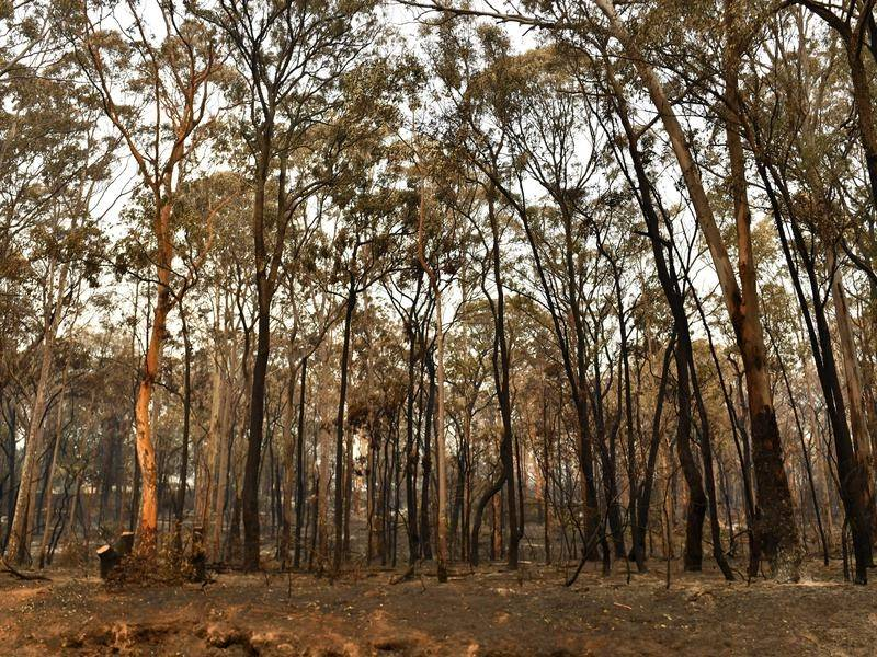 NSW nature conservationists are worried logging after the bushfires will decimate native forests.